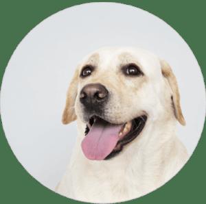 logo-versicherbodo.de-hundehaftpflicht-vergleich